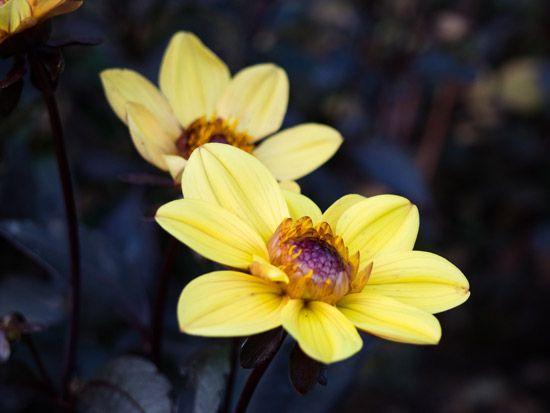 Curso Esencias Florales