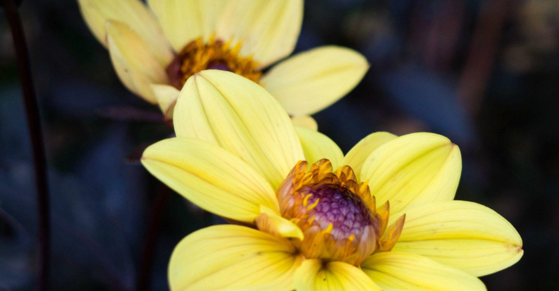 Curso Esencias Florales del Dr Bach