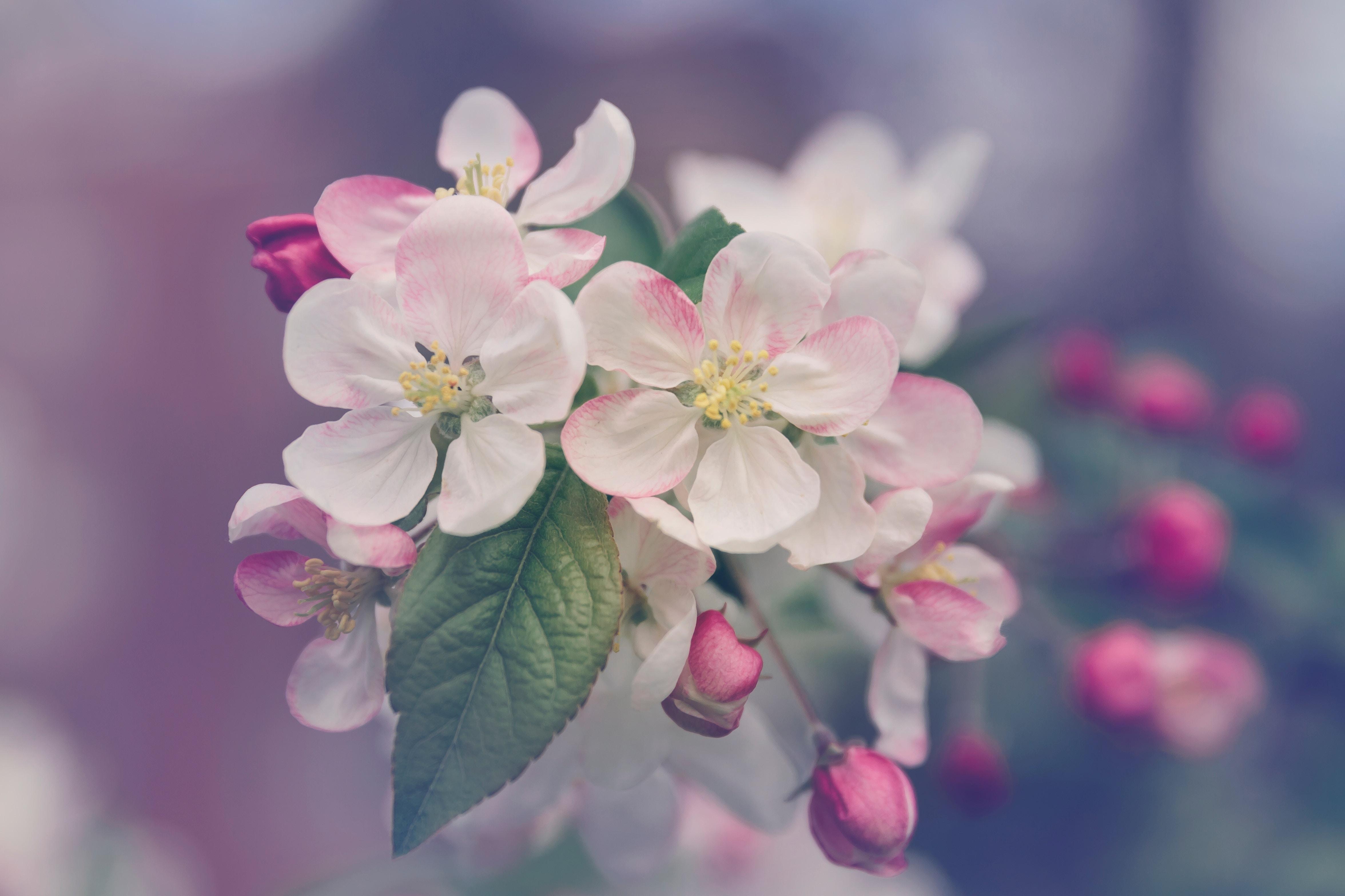 el reino floral y sus cualidades vibracionales flores del mediterraneo